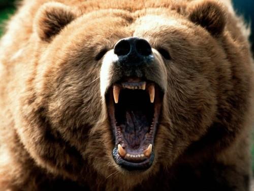 grizzly-1110x833e2580e849d26a9a4.jpg