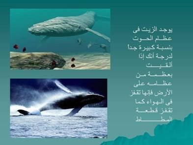 صور مفيدة  للحيوانات 2427.png