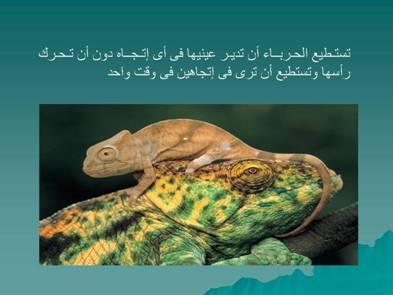 صور مفيدة  للحيوانات 2428.png