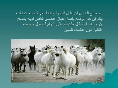 صور مفيدة  للحيوانات 2432.png