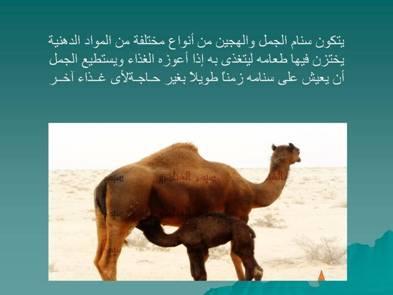 صور مفيدة  للحيوانات 2435.png