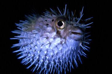 اسماك - سمك