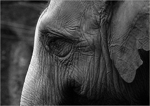 حزن الحيوانات