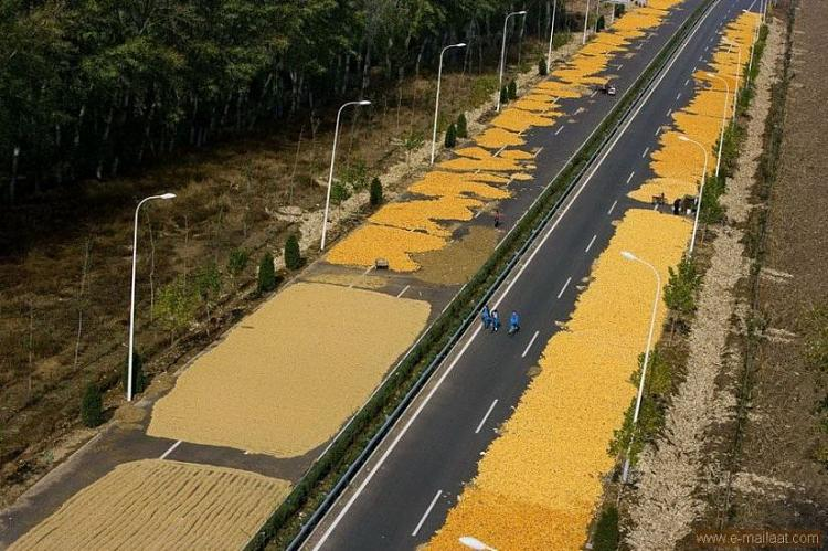 Drying corn on the highway from Beijing