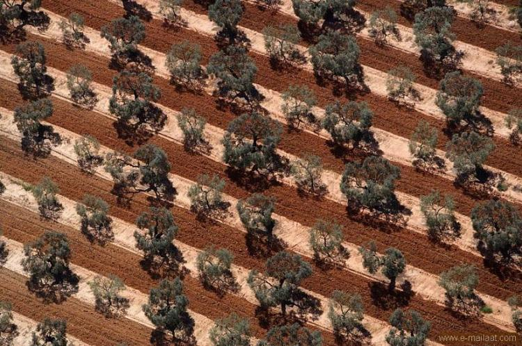 مزرعة زيتون , اسبانيا