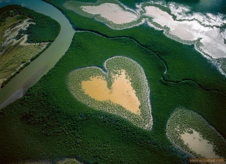 The heart of the mangrove in New Caledonia