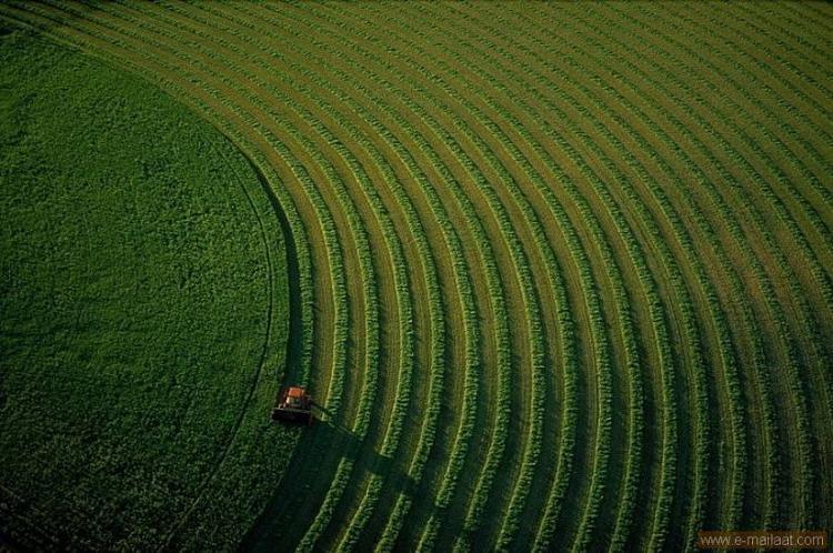 Field in Montana