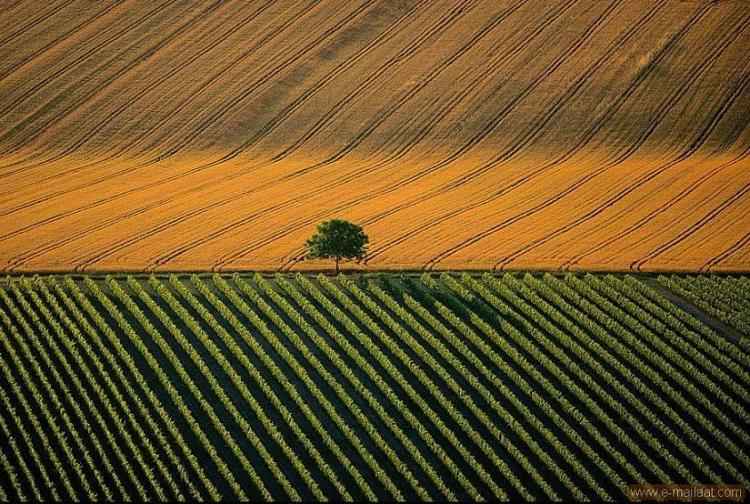 Agricultural landscape near the town of Cognac, France